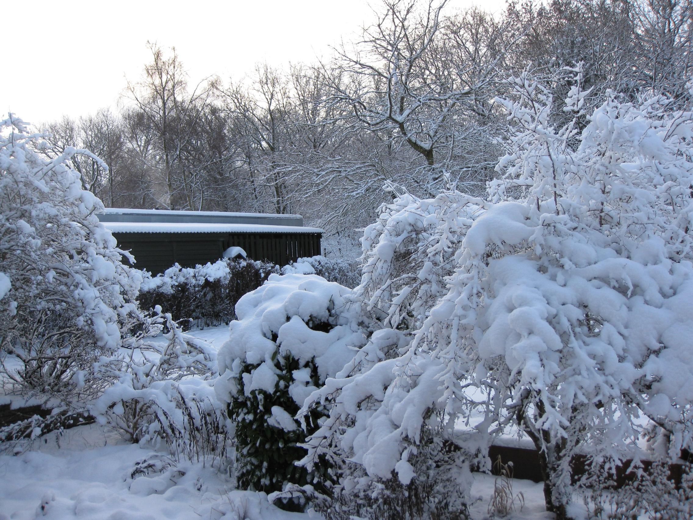 Vinter 2009 - 2010 (1)
